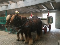 Visit Carlsberg - horse carriage